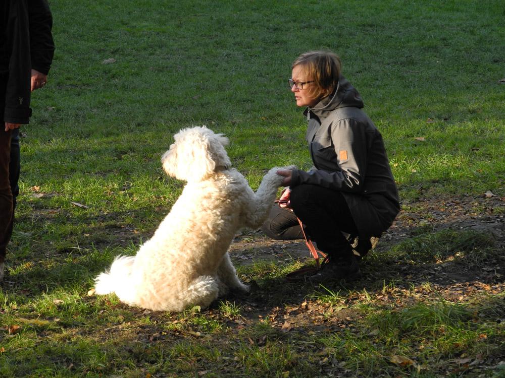 Hunde-Erlebnispädagogik in Hattingen